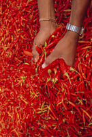 Red chilli peppers, Rajasthan, India 20025349780| 写真素材・ストックフォト・画像・イラスト素材|アマナイメージズ