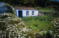 Single storey cottage and garden, Faja do Ouvidor, Sao Jorge Island, Azores, Portugal, Europe, Atlantic Ocean 20025358061| 写真素材・ストックフォト・画像・イラスト素材|アマナイメージズ