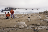 Tourists looking at gentoo penguins, Neko Harbor, Gerlache Strait, Antarctic Peninsula, Antarctica, Polar Regions 20025358967| 写真素材・ストックフォト・画像・イラスト素材|アマナイメージズ