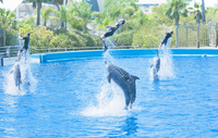 Dolphins pushing up in the air their instructors, dolphin show performed at the Oceanografic, City of Arts and Sciences, Valenci 20025361638| 写真素材・ストックフォト・画像・イラスト素材|アマナイメージズ