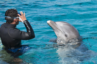 Dolphin Discovery at Chankanaab Park, Isla de Cozumel (Cozumel Island), Cozumel, off the Yucatan, Quintana Roo, Mexico, North Am 20025363044| 写真素材・ストックフォト・画像・イラスト素材|アマナイメージズ