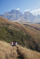 People hiking in Monk's Cowl Nature Reserve with Champagne Castle in background, Ukhahlamba-Drakensberg Park, UNESCO World Herit 20025364573| 写真素材・ストックフォト・画像・イラスト素材|アマナイメージズ