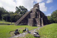Turkeys at a pyramid in the Mayan ruins of Tikal, UNESCO World Heritage Site, Guatemala, Central America 20025365402| 写真素材・ストックフォト・画像・イラスト素材|アマナイメージズ