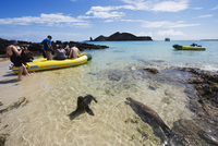 Sealion and tourist boat, Sullivan Bay, Isla Santiago, Galapagos Islands, UNESCO World Heritage Site, Ecuador, South America 20025365531| 写真素材・ストックフォト・画像・イラスト素材|アマナイメージズ