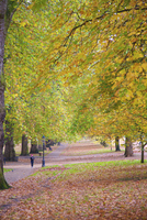 Walking in an autumnal Hyde Park, London, England, United Kingdom, Europe 20025377735| 写真素材・ストックフォト・画像・イラスト素材|アマナイメージズ