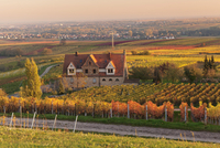 Winery in the vineyards in autumn at sunset, Burrweiler, German Wine Route, Pfalz, Rhineland-Palatinate, Germany, Europe 20025381206| 写真素材・ストックフォト・画像・イラスト素材|アマナイメージズ
