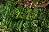 Different green vegetables for sale in market, Cambodia 20025386303| 写真素材・ストックフォト・画像・イラスト素材|アマナイメージズ