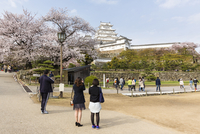 Himeji Castle and Cherry Blossoms, Himeji City, Hyogo Prefecture, Japan 20025394330| 写真素材・ストックフォト・画像・イラスト素材|アマナイメージズ