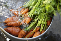 Bunch of Carrots in Metal Colander with Water being Sprayed on them 20025394409| 写真素材・ストックフォト・画像・イラスト素材|アマナイメージズ