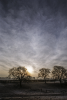 Farmland with trees in a frosty landscape 20038011042| 写真素材・ストックフォト・画像・イラスト素材|アマナイメージズ