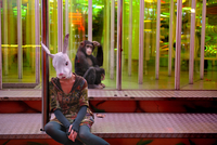 A chimpanzee and a woman with rabbit mask 20038011863| 写真素材・ストックフォト・画像・イラスト素材|アマナイメージズ