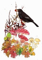 Blackbird with red berry, acorns and toadstools in autumn  20039002985| 写真素材・ストックフォト・画像・イラスト素材|アマナイメージズ