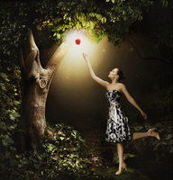 Woman reaching for glowing apple hanging from tree in woods  20039003995| 写真素材・ストックフォト・画像・イラスト素材|アマナイメージズ