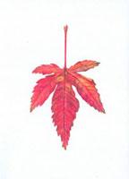 落葉 20041000225| 写真素材・ストックフォト・画像・イラスト素材|アマナイメージズ