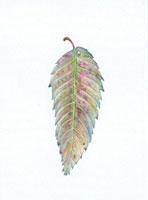 ケヤキの落葉 20041000240| 写真素材・ストックフォト・画像・イラスト素材|アマナイメージズ