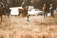Dog Runs In A Field, Hunters In The Background On Horses 20055005454| 写真素材・ストックフォト・画像・イラスト素材|アマナイメージズ