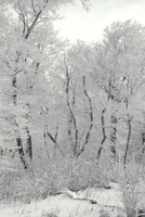 Winter trees covered with snow and ice 20055022449| 写真素材・ストックフォト・画像・イラスト素材|アマナイメージズ