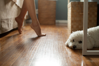 Poodle lying on floor of room, feet of woman in background 20056005271| 写真素材・ストックフォト・画像・イラスト素材|アマナイメージズ