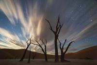 Stars and storm clouds over the dead acacia trees in Dead Vlei.Sossusvlei, Namibia 20056009003| 写真素材・ストックフォト・画像・イラスト素材|アマナイメージズ