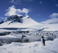 Single gentoo penguin on ice in a snowy landscape with a mountain in the background, on the Antarctic Peninsula, Antarctica, Pol 20062009394| 写真素材・ストックフォト・画像・イラスト素材|アマナイメージズ