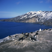 Chinstrap penguins on the rocks on the coast of Deception Island on the Antarctic Peninsula, Antarctica, Polar Regions 20062009504| 写真素材・ストックフォト・画像・イラスト素材|アマナイメージズ