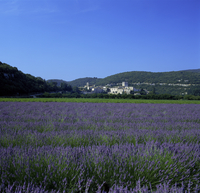 Lavender fields outside the village of Montclus, Gard, Languedoc Roussillon, France, Europe 20062018748| 写真素材・ストックフォト・画像・イラスト素材|アマナイメージズ