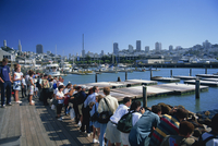 Tourists watching sea lions on Pier 39, at Fishermans Wharf, San Francisco, California, United States of America, North America 20062018823| 写真素材・ストックフォト・画像・イラスト素材|アマナイメージズ