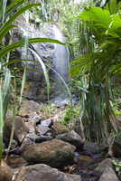 Waterfall in the Vallee de Mai Nature Reserve, UNESCO World Heritage Site, Baie Sainte Anne district, Praslin, Seychelles, Afric 20062019208| 写真素材・ストックフォト・画像・イラスト素材|アマナイメージズ