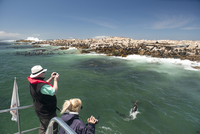 Tourists photographing and filming a fur seal (Arctocephalus pusillus) jumping out of the water, Cape fur seal colony offshore, 20062022181| 写真素材・ストックフォト・画像・イラスト素材|アマナイメージズ