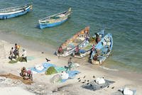 Fisherman carrying fish to land and tidying up their colourful fishing boats under Pamban Bridge, Rameshwaram, Tamil Nadu, India 20062025394| 写真素材・ストックフォト・画像・イラスト素材|アマナイメージズ