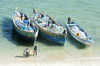 Fisherman carrying fish to land and tidying up their colourful fishing boats under Pamban Bridge, Rameshwaram, Tamil Nadu, India 20062025395| 写真素材・ストックフォト・画像・イラスト素材|アマナイメージズ