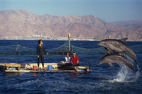 Woman blowing whistle to attract leaping dolphins for tourists to view at Dolphin Reef, Eilat, Israel, Middle East 20062028525| 写真素材・ストックフォト・画像・イラスト素材|アマナイメージズ