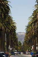 Hollywood Hills and The Hollywood sign from a tree lined Beverly Hills Boulevard, Los Angeles, California, United States of Amer 20062046156| 写真素材・ストックフォト・画像・イラスト素材|アマナイメージズ