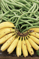 Bananas and green beans at the market, Martinique, Lesser Antilles, West Indies, Caribbean, Central America 20062055221| 写真素材・ストックフォト・画像・イラスト素材|アマナイメージズ