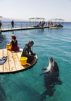 The Dolphin Reef, Eilat, Israel, Middle East 20062055393| 写真素材・ストックフォト・画像・イラスト素材|アマナイメージズ