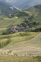 Longsheng terraced ricefields, Guilin, Guangxi Province, China, Asia 20062062537| 写真素材・ストックフォト・画像・イラスト素材|アマナイメージズ