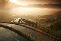 Sunrise in June, Longsheng terraced ricefields, Guangxi Province, China, Asia 20062062559| 写真素材・ストックフォト・画像・イラスト素材|アマナイメージズ