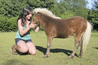 Girl stroking American miniature horse (Equus caballus) foal, Wiltshire, England, United Kingdom, Europe