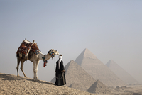 A Bedouin guide with his camel, overlooking the Pyramids of Giza, UNESCO World Heritage Site, Cairo, Egypt, North Africa, Africa 20062067768| 写真素材・ストックフォト・画像・イラスト素材|アマナイメージズ