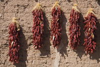 Chili peppers on adobe wall, Tubac, Greater Tucson Region, Arizona, United States of America, North America 20062068891| 写真素材・ストックフォト・画像・イラスト素材|アマナイメージズ