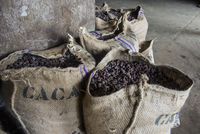 Bags full of cocoa beans, Cocoa plantation Roca Aguaize, East coast of Sao Tome, Sao Tome and Principe, Atlantic Ocean, Africa 20062097154| 写真素材・ストックフォト・画像・イラスト素材|アマナイメージズ