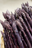 Purple asparagus spears in a basket in the Vale of Evesham, traditional home of asparagus, Worcestershire 20062116451| 写真素材・ストックフォト・画像・イラスト素材|アマナイメージズ