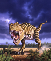 A Tyrannosaurus Rex attacks, lit by the late afternoon sun. 20064000012| 写真素材・ストックフォト・画像・イラスト素材|アマナイメージズ