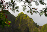Iao Valley State Park, with flowering Heleconia branches framing the lush valley walls in morning fog, Maui, Hawaii, USA 20070002780| 写真素材・ストックフォト・画像・イラスト素材|アマナイメージズ