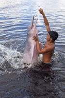 South America, Brazil, Amazonas, A boy feeding an Amazon river dolphin fish on a creek in the Rio Negro in the Anavilhanas islan 20088002123| 写真素材・ストックフォト・画像・イラスト素材|アマナイメージズ
