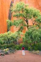 Uluru (Ayers Rock), Uluru-Kata Tjuta National Park, Northern Territory, Central Australia, Australia. Woman walking on the Mala 20088011951| 写真素材・ストックフォト・画像・イラスト素材|アマナイメージズ