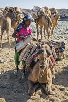 Ethiopia, Asa Bolo, Afar Region. A salt miner loads salt onto a camel which can carry up to 25 blocks. The blocks must be off-lo