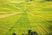 Indonesia, Flores Island, Cancar. The attractive Spider's Web rice paddies near Ruteng. 20088040846| 写真素材・ストックフォト・画像・イラスト素材|アマナイメージズ