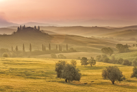 Italy, Tuscany, Siena district, Orcia Valley, Podere Belvedere near San Quirico d'Orcia 20088042900| 写真素材・ストックフォト・画像・イラスト素材|アマナイメージズ