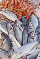 Italy, Apulia, Lecce district, Salentine Peninsula, Salento, Gallipoli, Fresh seafood on display in the harbour 20088045310| 写真素材・ストックフォト・画像・イラスト素材|アマナイメージズ